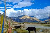 zanskar is highland that ranges altitude