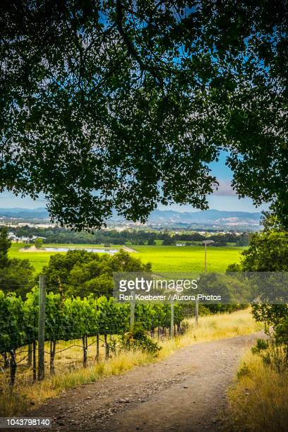 scenery with dirt road and fence in shiloh ranch regional park - koeberer stock photos and pictures