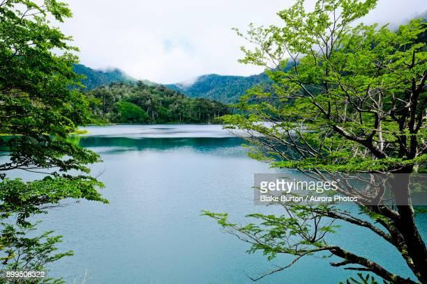 scenery with lake, los lagos trail, huerquehue national park, pucon, araucania region, chile - pucon fotografías e imágenes de stock