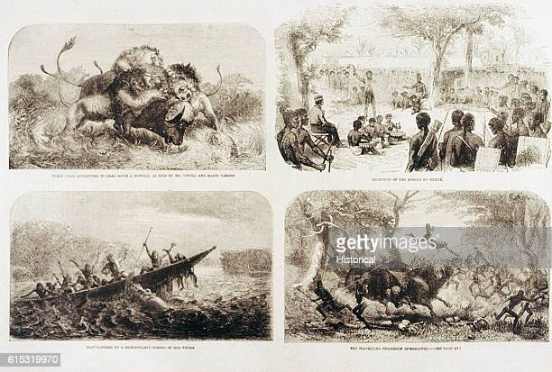 Scenes from Dr Livingstone's travels in South Africa the 1st panel shows 3 lions pulling down a buffalo already wounded by a twoounce ball of shot...