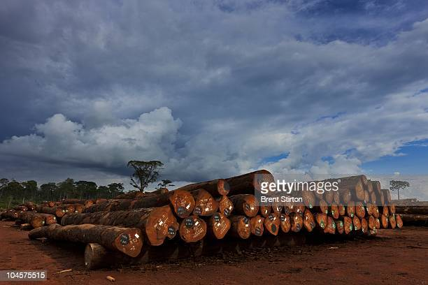 Scenes from Pallisco Logging company's FSC Timber operations in Mindourou, Cameroon, June 3, 2010. Pallisco is attempting to build up its FSC...