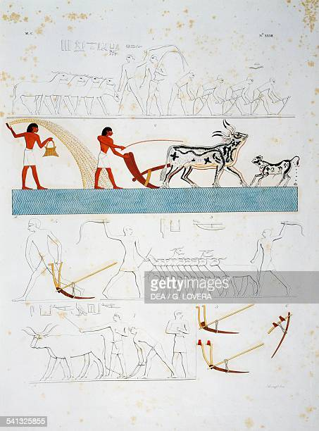 Scenes of farm life plowing and sowing Plate XXXII from The monuments of Egypt and Nubia civil monuments 18321844 by Ippolito Rosellini