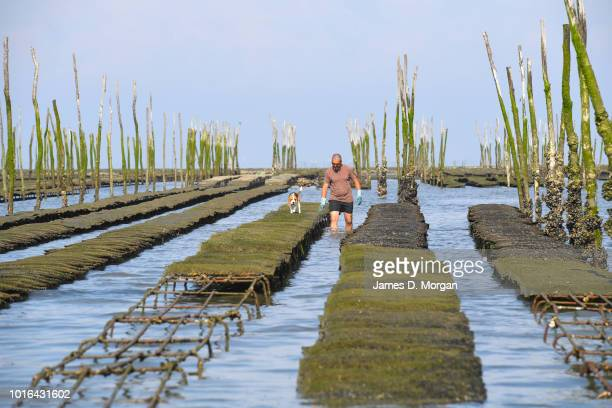 Scenes of oyster farmers at work in Arcachon off Cape Ferret in France on June 20th 2018