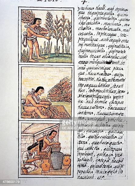 Scenes of peasant life the wheat harvest the ginning on a mat and stocking in the jars text in Nahuati from the facsimile of the manuscript General...