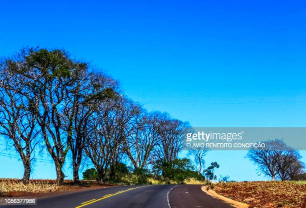 scenes the highway margins in the northern region of the state of parana in brazil. - state stock pictures, royalty-free photos & images