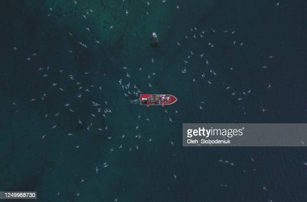 scenic aerial view of fishing boat   in lofoten islands in winter - drone point of view stock pictures, royalty-free photos & images