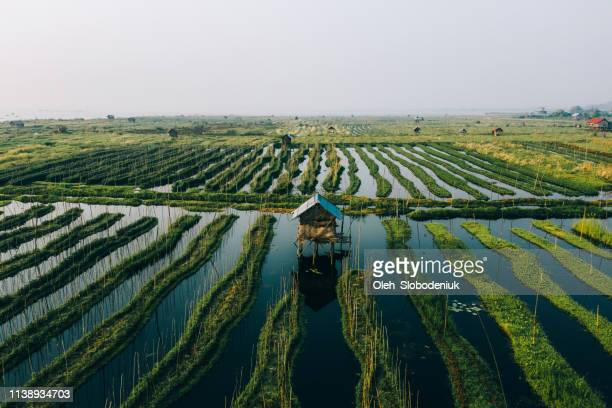 scenic aerial view of floating gardens  on inle lake - inle lake stock pictures, royalty-free photos & images