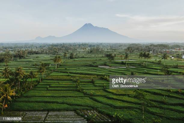 vista aérea panorámica del volcán merapi en java - java indonesia fotografías e imágenes de stock