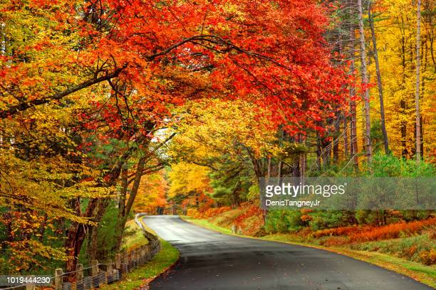 scenic autumn road in the quabbin reservoir park area of massachusetts - season stock pictures, royalty-free photos & images