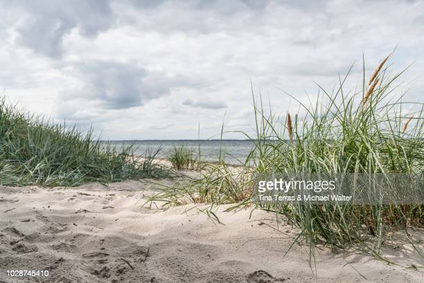 scenic beach view from the baltic sea. - gras stock pictures, royalty-free photos & images