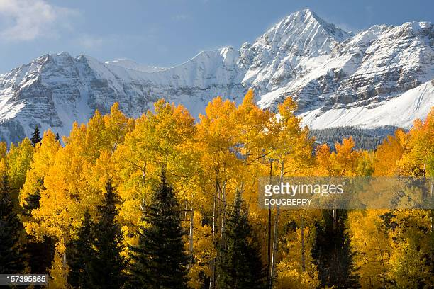 scenic colorado mountains - aspen tree stock pictures, royalty-free photos & images
