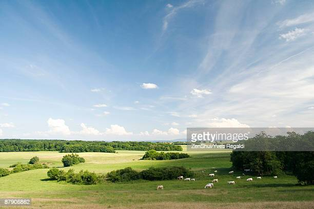 scenic countryside with cattle grazing in distance - escena rural fotografías e imágenes de stock