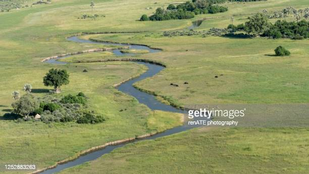 scenic flight over the okavango delta in botswana - named wilderness area stock pictures, royalty-free photos & images
