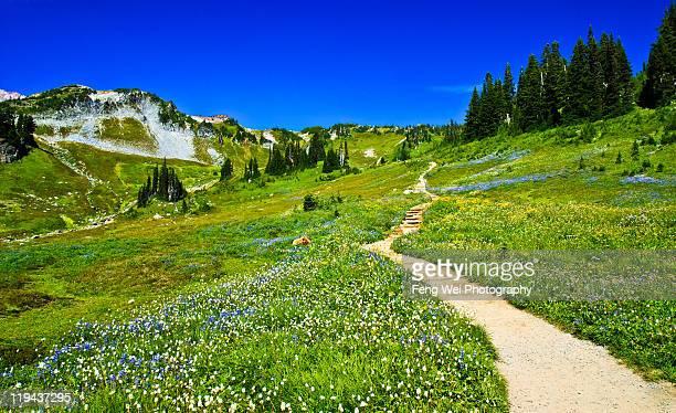 Scenic hiking trail on mount rainier