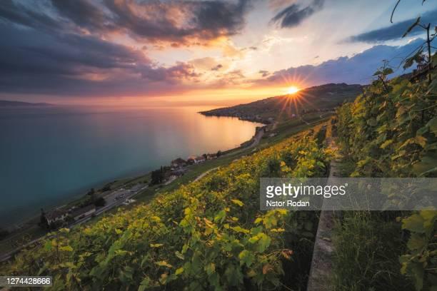 scenic landscape at sunset, puidoux, vaud, switzerland - ヴォー州 ストックフォトと画像