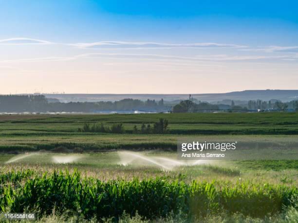 scenic landscape cornfields and different irrigation systems at sunset - salamanca imagens e fotografias de stock