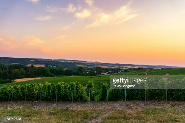 scenic landscape in the champagne at sunrise time, vineyards in the montagne de reims - エペルネ ストックフォトと画像