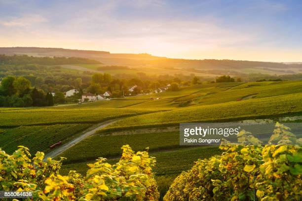 scenic landscape in the champagne at sunrise time, vineyards in the montagne de reims, france - aquitaine stock photos and pictures