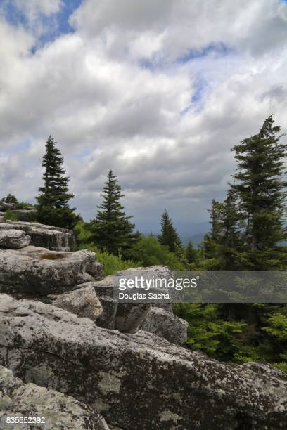Scenic Landscape of boulders and Pine trees