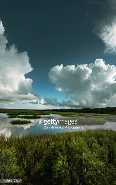 scenic landscape - jacksonville florida stock-fotos und bilder