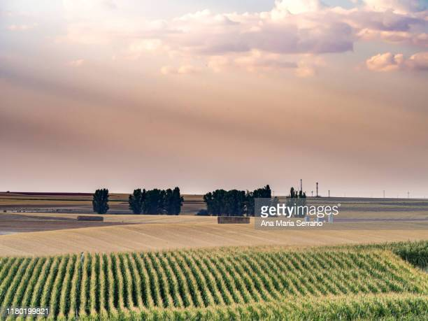 scenic landscape with corn fields at sunset on a cloudy day - salamanca imagens e fotografias de stock