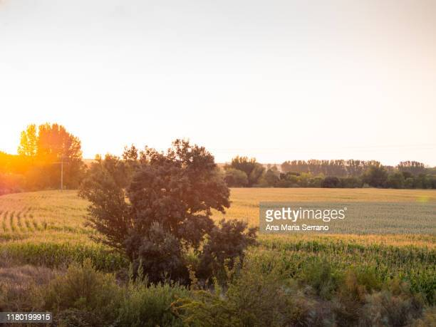 scenic landscape with corn fields at sunset on a cloudy day - サラマンカ ストックフォトと画像