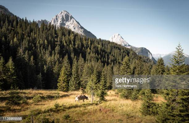 scenic meadow in the mountains - bavaria stock pictures, royalty-free photos & images