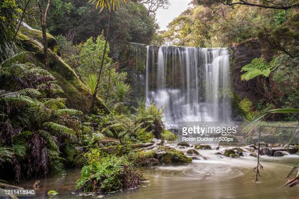 scenic mokoroa falls, auckland, new zealand - images stock pictures, royalty-free photos & images