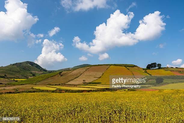 Scenic Mountains, Araku valley