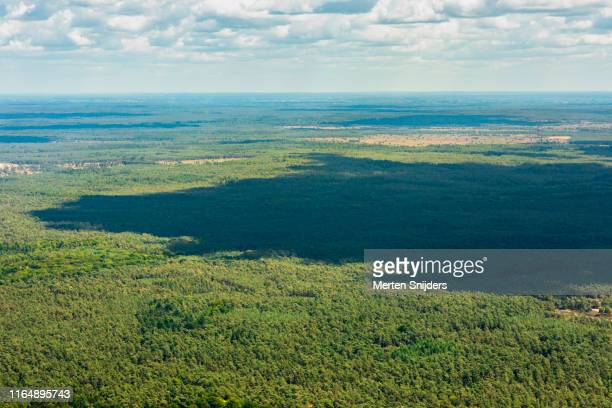 scenic panorama of national park de hoge veluwe - merten snijders stock pictures, royalty-free photos & images