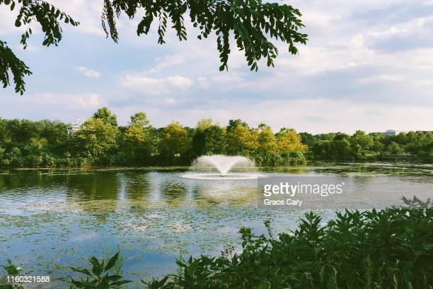 scenic pond surrounded by lush greenery - バージニア州 アレクサンドリア ストックフォトと画像