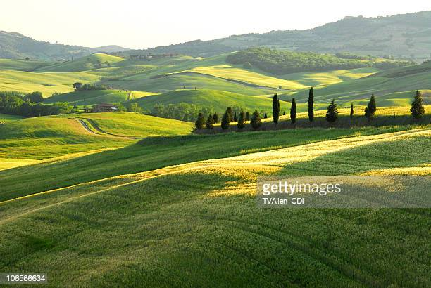 Scenic rolling green hills with Tuscan Cypress in distance