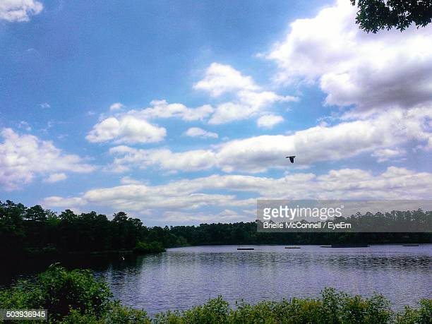 scenic shot of calm countryside lake along plants - mcconnell stock pictures, royalty-free photos & images