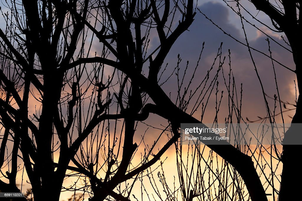Scenic Shot Of Silhouette Branches Against The Sky : Stockfoto