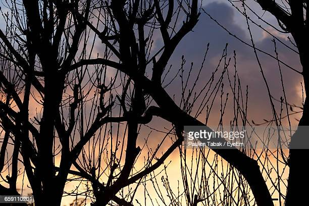 scenic shot of silhouette branches against the sky - paulien tabak stock pictures, royalty-free photos & images