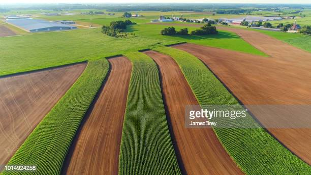 scenic strip cropping farm field. - corn field stock photos and pictures