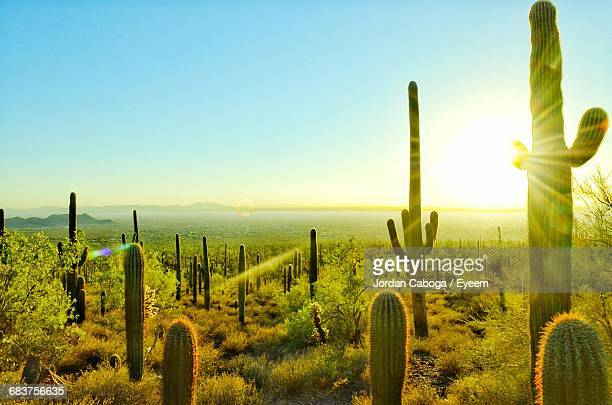 scenic sunlight over arizona desert - saguaro cactus stock pictures, royalty-free photos & images