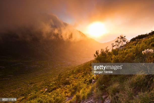 scenic sunset over table mountain and lions head as seen from a hiking trail up devils peak, cape town, western cape province, south africa - fynbos fotografías e imágenes de stock