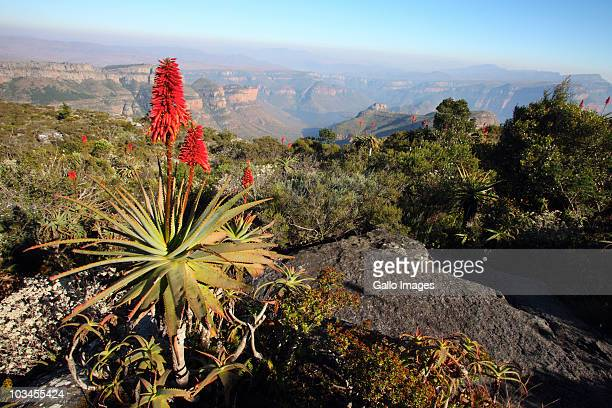 a scenic view at the blyde river canyon, mpumalanga, south africa - mpumalanga province stock pictures, royalty-free photos & images