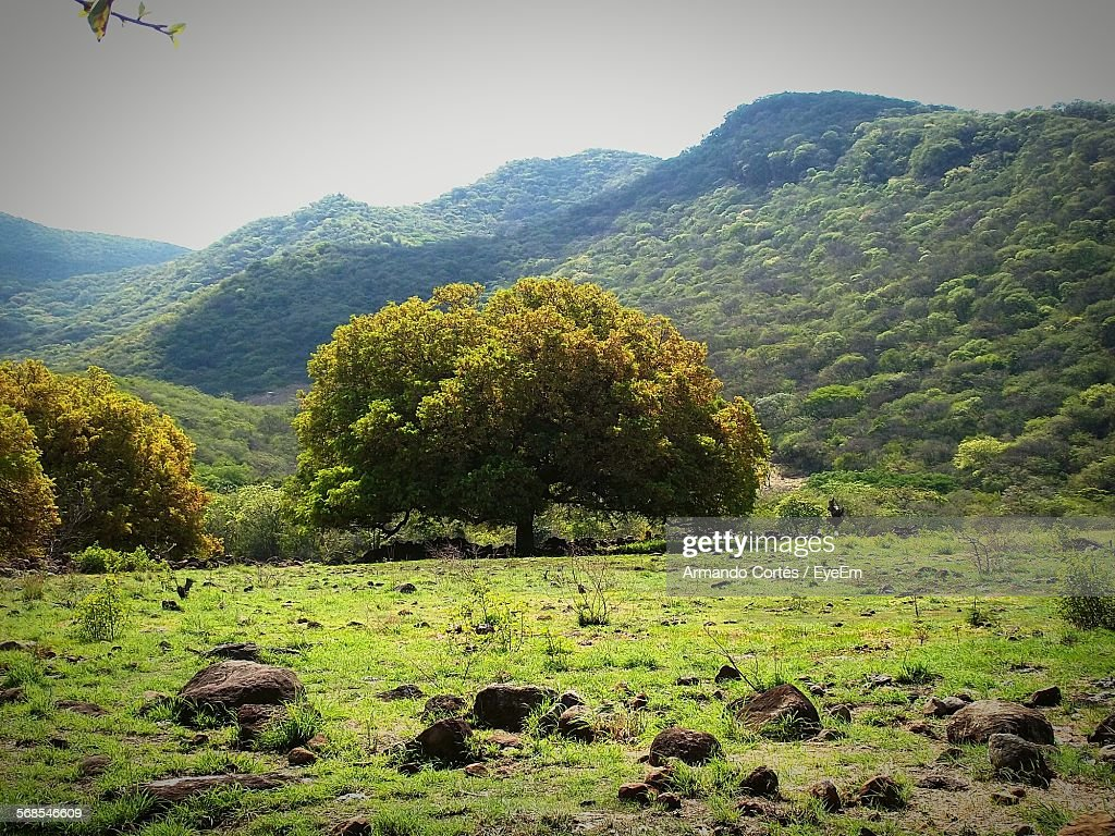 Scenic View Landscape And Mountains Against Clear Sky : Stock Photo
