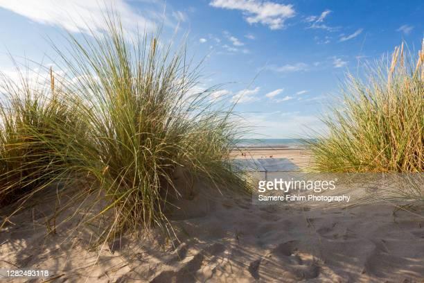 scenic view of a beach against sky - belgische cultuur stockfoto's en -beelden