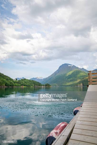scenic view of a dock on a lake in halsa, norway - skinny dipping stock pictures, royalty-free photos & images