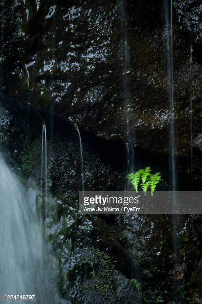 scenic view of a fern near a waterfall in forest - arne jw kolstø stock pictures, royalty-free photos & images