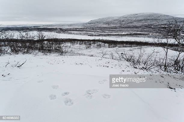 Scenic view of a fox footprint in a snowy landscape at Malla Strict Nature Reserve, Finland