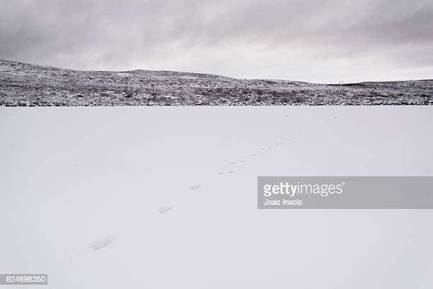 Scenic view of a frozen lake with arctic fox footprints at Malla Strict Nature Reserve, Finland