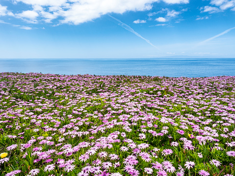 Scenic View Of a meadow of green grass and flowers of colors by the sea against sky. - gettyimageskorea