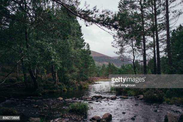 a scenic view of a river. - heather brooke ストックフォトと画像