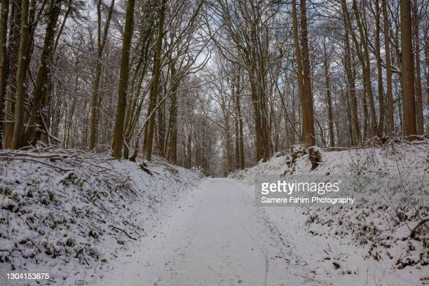 scenic view of a tree lane along a forest covered by snow - hainaut stock pictures, royalty-free photos & images