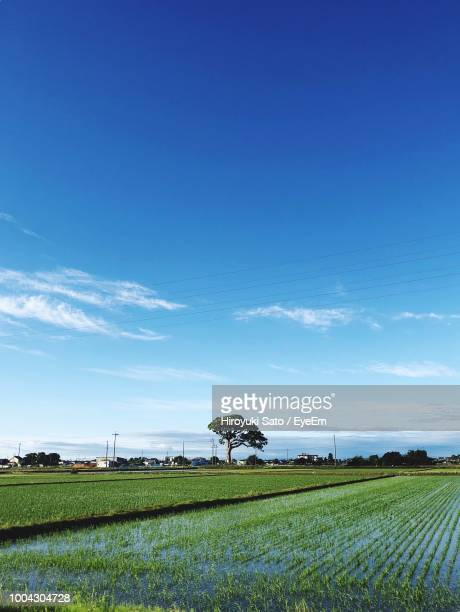 scenic view of agricultural field against blue sky - 縦位置 ストックフォトと画像