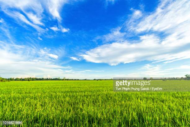 scenic view of agricultural field against blue sky - eyeem stock pictures, royalty-free photos & images